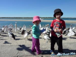 pelicans-labradorP1050451